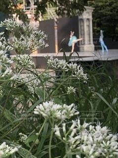 森の中の妖精の写真・画像素材[3495934]