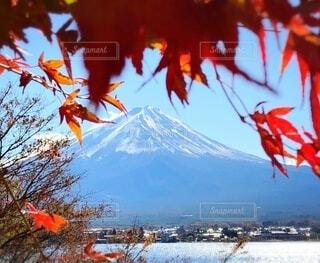 青空に映える紅葉の写真・画像素材[3724765]