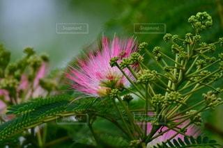 花のクローズアップの写真・画像素材[3501340]