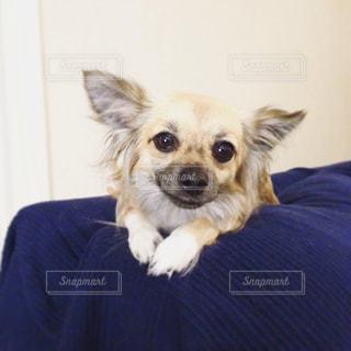 犬の写真・画像素材[149059]