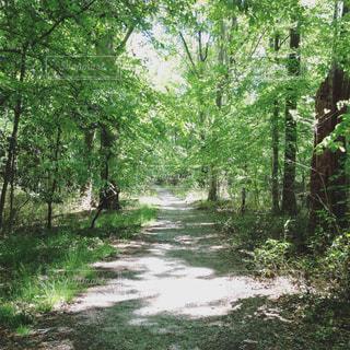 森林の写真・画像素材[184971]