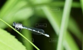 葉の上にトンボの写真・画像素材[3395859]