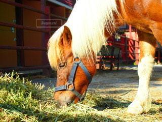 フェンスの隣に立っている茶色の馬の写真・画像素材[3471105]