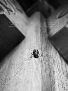 蝉の抜殻との写真・画像素材[3791324]