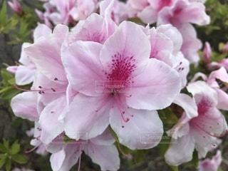花のクローズアップの写真・画像素材[3398613]