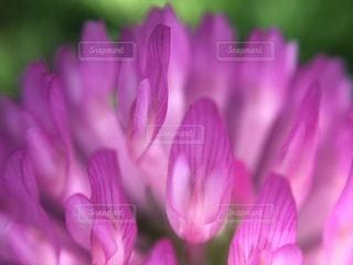 花のクローズアップの写真・画像素材[3539963]