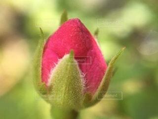 花のクローズアップの写真・画像素材[3618236]