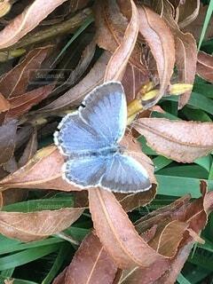蝶の写真・画像素材[3648314]