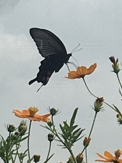 蝶々と花の写真・画像素材[3730041]