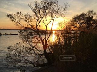 水の体の隣にある木の写真・画像素材[4342760]