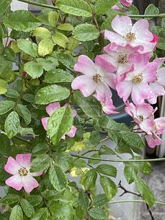 花のクローズアップの写真・画像素材[4413317]