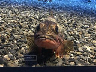 水の下で泳ぐ魚の写真・画像素材[3399715]