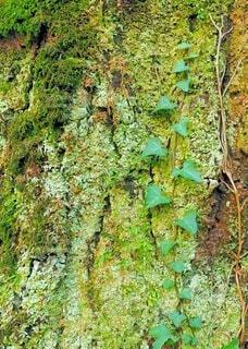 木のクローズアップの写真・画像素材[3701894]