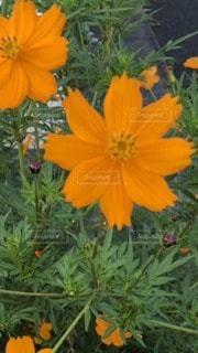 可愛いお花の写真・画像素材[3405140]