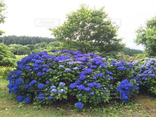 花の写真・画像素材[142848]