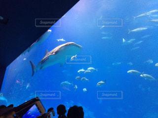 水族館の写真・画像素材[142321]