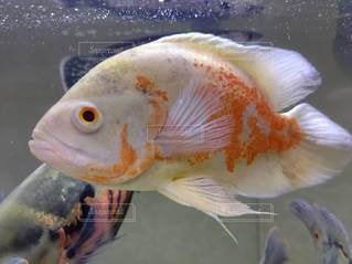 おうちで水族館の写真・画像素材[3405168]