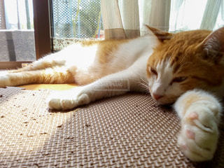 窓の隣で眠っている大きな猫の写真・画像素材[3539541]