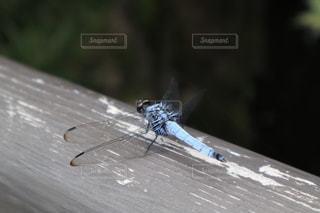 地面に昆虫の写真・画像素材[3554828]