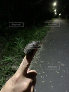 指先をのぼるカブトムシの写真・画像素材[3518735]