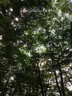 自然の写真・画像素材[147344]