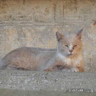 コンクリートの壁の前の塀の上で寝そべってお昼寝の茶トラ猫の写真・画像素材[3546418]