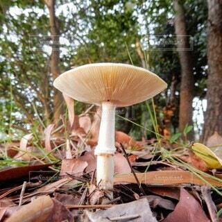 秋のキノコのアップの写真・画像素材[3724696]