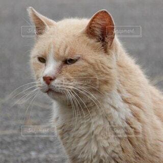 トラ猫のアップの写真・画像素材[3784129]