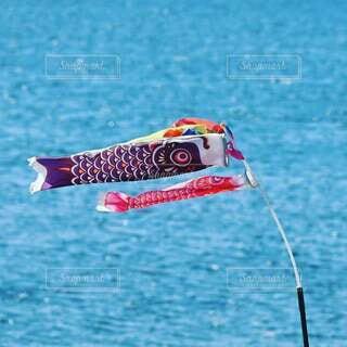 いい風で鯉のぼりが泳いでいましたの写真・画像素材[4109817]