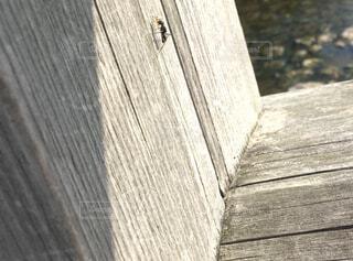 架け橋の写真・画像素材[4529620]