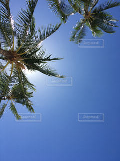 夏の写真・画像素材[695389]