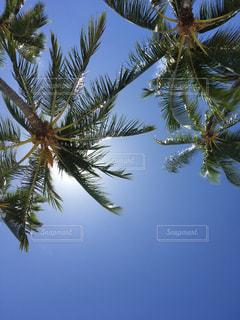 夏の写真・画像素材[695390]