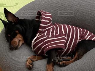 愛くるしい寝相の写真・画像素材[4241019]