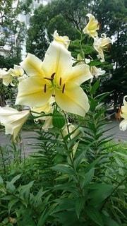 黄色い花の写真・画像素材[3415721]