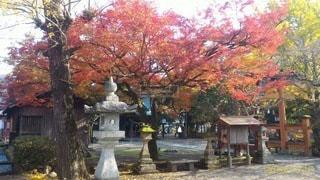 神社の境内の写真・画像素材[3412994]