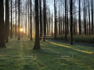 森の中の木の写真・画像素材[3415037]