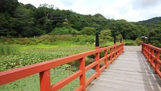 広大な庭園の赤い橋の写真・画像素材[3507647]