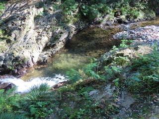 水が澄んでキレイな渓流。の写真・画像素材[3902886]