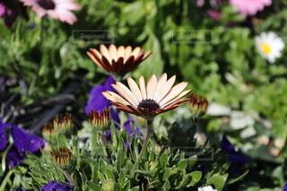可愛らしい花のクローズアップの写真・画像素材[4186690]
