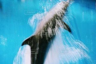 イルカのジャンプに追いつけないの写真・画像素材[3481586]