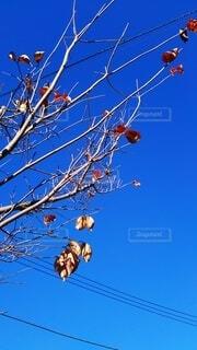 残り少ない枯れ葉の写真・画像素材[3650744]