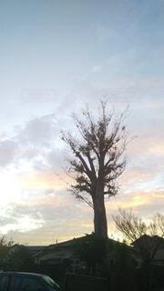 見上げると大木の写真・画像素材[3928585]