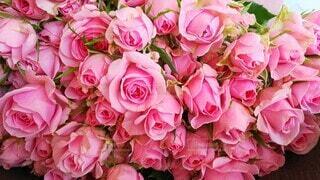 日頃の感謝をバラの花束に込めるの写真・画像素材[3951782]