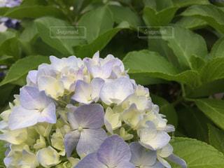 花の写真・画像素材[148125]