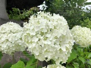 花のクローズアップの写真・画像素材[3418311]