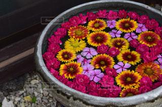 花の写真・画像素材[143383]