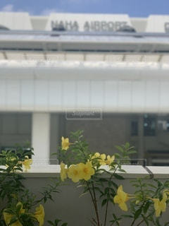 建物の上に座っている花瓶の写真・画像素材[3513490]