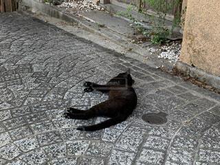 地面に横たわっている犬の写真・画像素材[3666174]