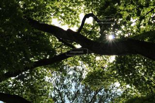森林 - No.169796