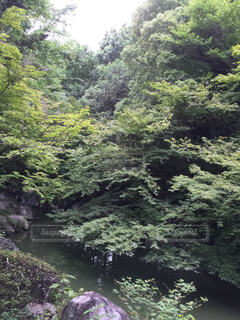 自然の写真・画像素材[146590]